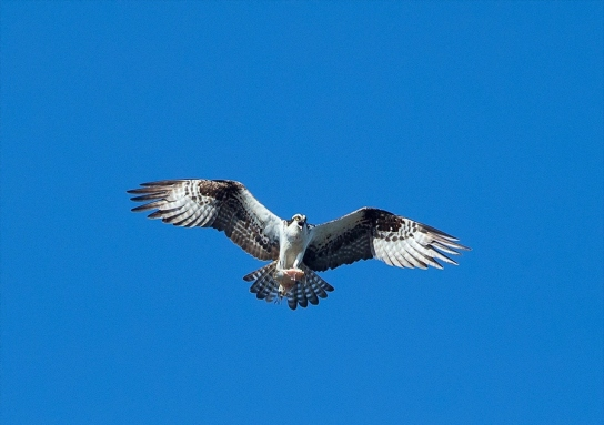 lbi-osprey-skydance-peak